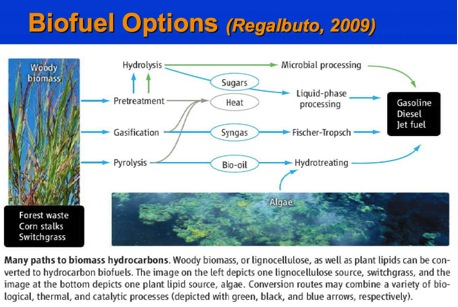 Biofuel Options
