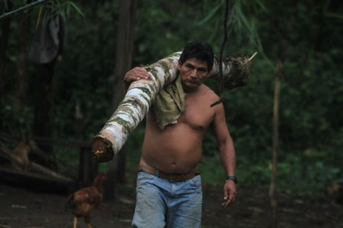Shackays father gets a log from the rainforest (4)