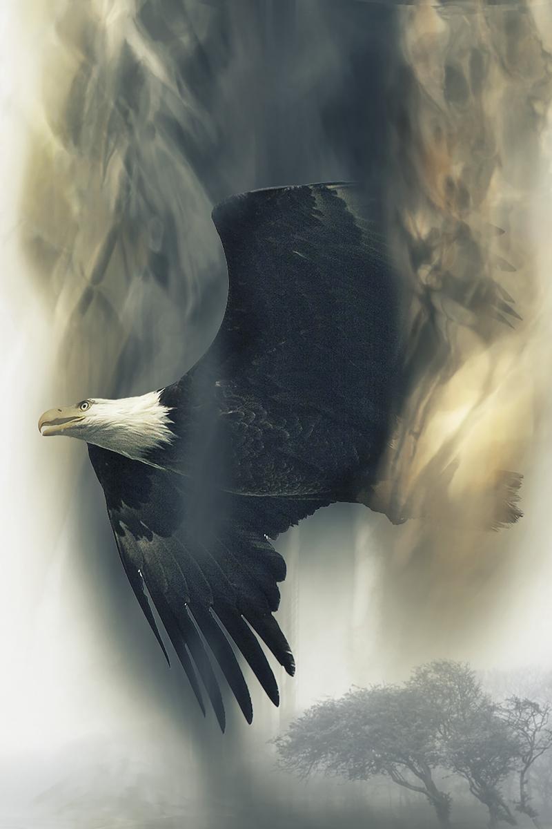 Bald-eagle-1606699