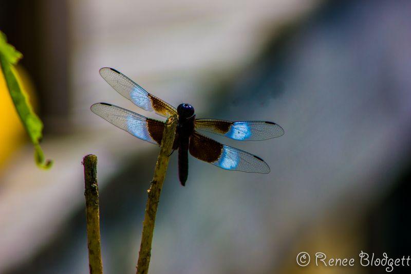Nature Shots Caroga (10)