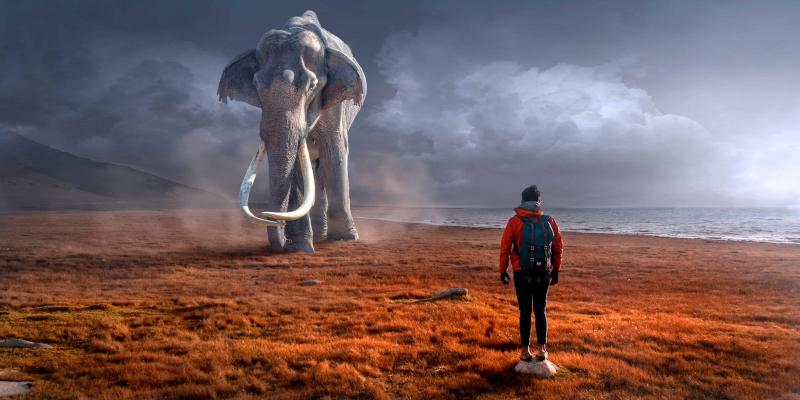 Elephant-ions777