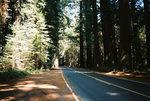 Drivethruredwoods