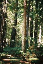 Redwoodhike2