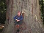 Redwoodseat