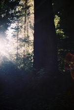 Redwoodsunglare