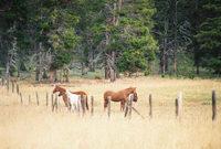 Wyoming_horses